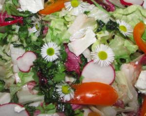 """Salat """"bunte Sommerwiesn"""" mit Gänseblümchen, Feta und Wildkräuteressig"""